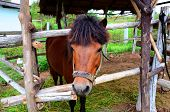 horse in box stall