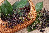 elderberry in basket on jute background