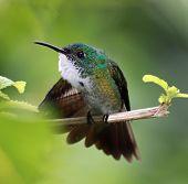 Close-up of a Hummingbird