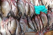 Fresh Tilapia Fish In The Market