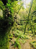 Forest On La Palma, Canary Islands