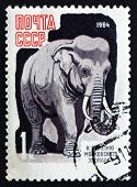 Postage Stamp Russia 1968 Asian Elephant, Animal