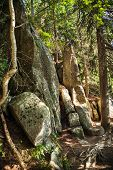 Stones On A Mountain Trail In The High Tatras