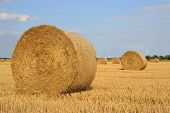 round straw rolls on a harvested field