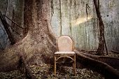 chair and the tree