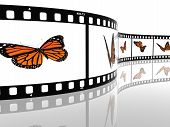 A Closeup Of A Monarch Butterfly On A Film Cell
