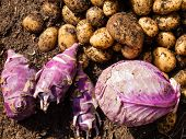 Freshly Harvested Potatoes, Cabbage And Kohlrabi