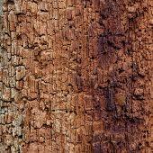 Old wood eaten by bark beetle