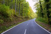 Pyrenees curve road in forest of Spain
