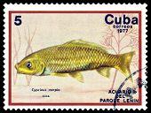 Vintage  Postage Stamp. Cyprinus Carpio.