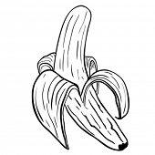 peeled banana cartoon isolated on white
