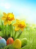 Easter eggs and daffodil flower on meadow
