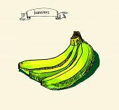 hand drawn vintage illustration of banana