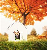 a cute chihuahua in a doghouse out in a yard during fall or autumn weather