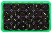 Germination Tray With Small Seedlings