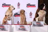 LOS ANGELES - FEB 14:  Papi, Marley, Baxter, Beethoven at the Mr. Peabody honored with Pawprints in