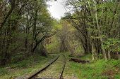 Empty Railway In Autumn Forest