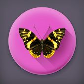 Butterfly, long shadow vector icon