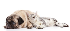 foto of cat dog  - cat taking a nap leaning to the dog - JPG