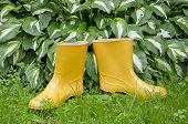 Pair Rain Rubber Yellow Boots On  Garden Grass