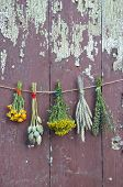 picture of hyssop  - varions plants and medical herb bunch on old wooden cracked farm wall - JPG