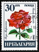 Postage Stamp Bulgaria 1985 Rose, Rosa Marista, Flower