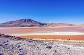picture of eduardo avaroa  - Laguna Colorada - JPG