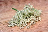 stock photo of elderberry  - Health elderberry flowers on a wooden table - JPG