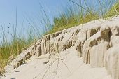 pic of dune grass  - Dune with dune-grass at the coast of Holland