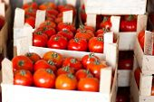 tomatoes at bazar