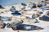 Napping Harbor Seals