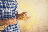 Farmer Holding Wheat Ears