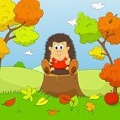 Hedgehog autumn