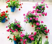 Flowerpots with geranium on stucco wall