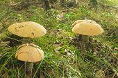 Mushrooms Aspen