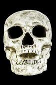 Skull Head Isolated