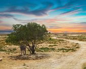 Tunisian Landscape With Lonely Tree