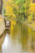 Autumn river view with trees