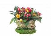 ornamental flowerpot isolated