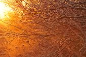 Nature background - frost covered branches in warm early morning light