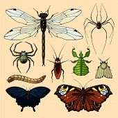 Realistic images of insects, set 2