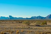 Arizona Brush 2