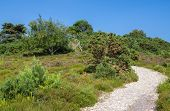 Heathland At Arne In Dorset