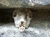 image of unnerving  - deer skull - JPG