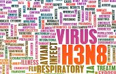 picture of avian flu  - H3N8 Concept as a Medical Research Topic - JPG