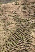 stock photo of ethiopia  - Dry terraced farmland in Ethiopia growing Qat - JPG