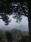 foto of bend  - It is a foggy day in Big Bend National park - JPG