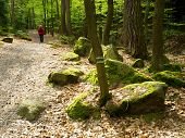 stock photo of lichenes  - Boulders in the woods among the trees covered with moss and lichen and a young tourist - JPG