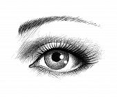 pic of human eye  - Human eye  - JPG