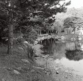 Japenese Garden, Black And White